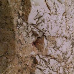 Pools Of Blood At Gethsemane